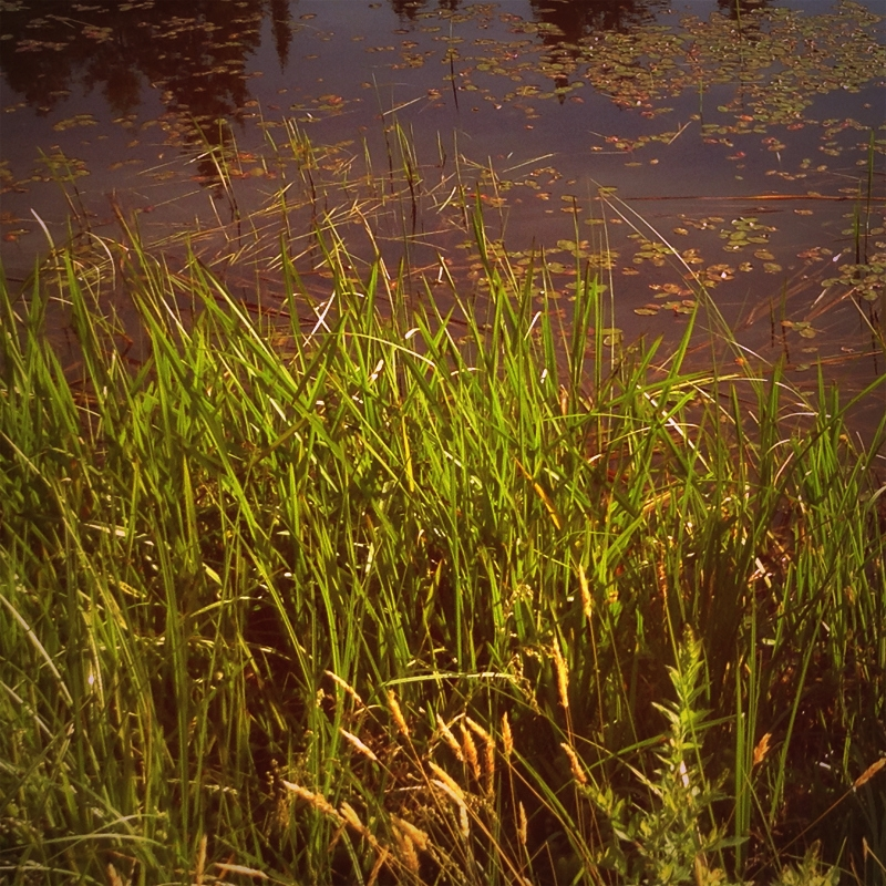 Pond - photography, pond, marsh - dispel   ello