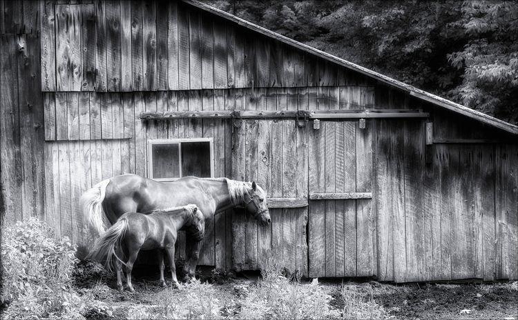 horses hill house  - monochrome - docdenny | ello