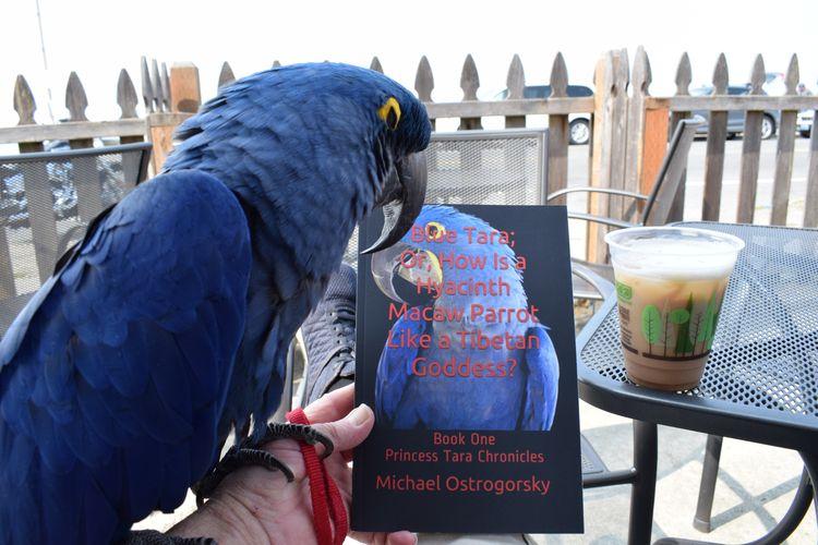 Parrot, Book, Coffee Edition. r - michaelostrogorsky | ello