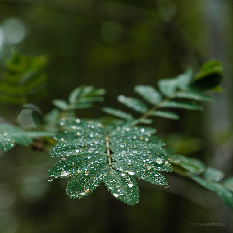 rain - paulperton | ello