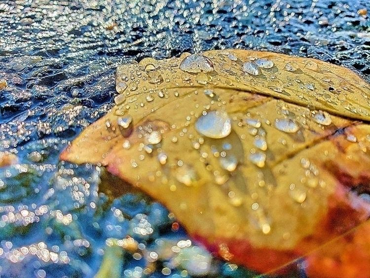 fall coming winter rush life st - syndlazo | ello
