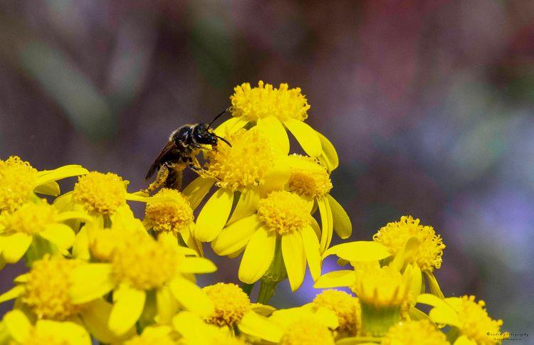 Dressed Pollen, 2018 flowers ki - azdrk | ello