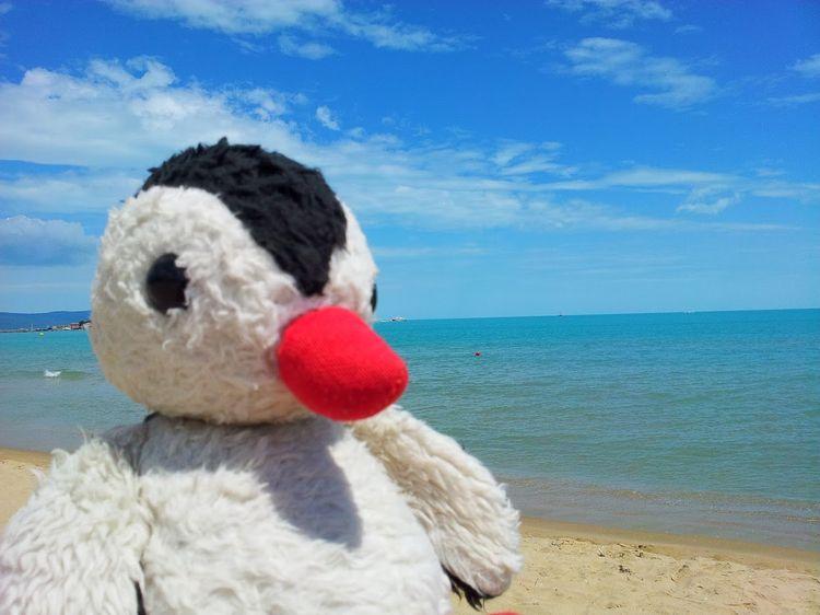 saved plush penguin mold - plushies, - rooster64 | ello