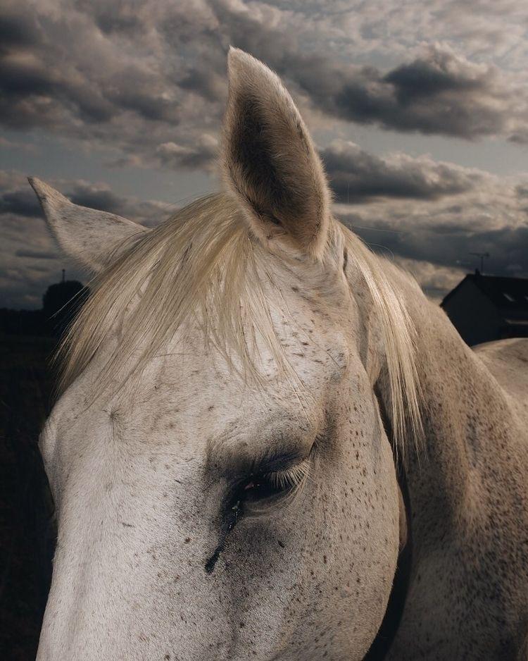 NewOnEllo, horse, countryside - letizialefur | ello