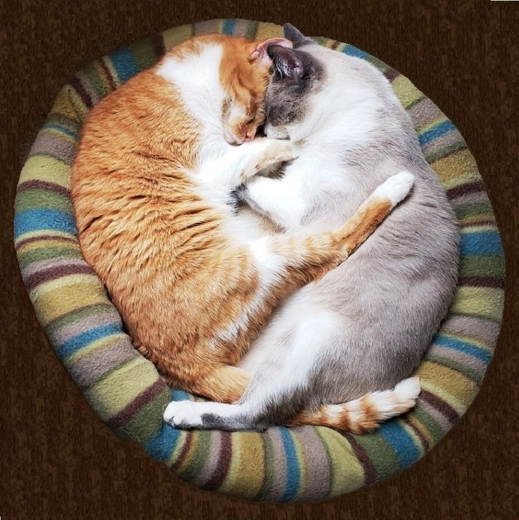 Nap Time - cat, yinyang, photography - rjayslais | ello