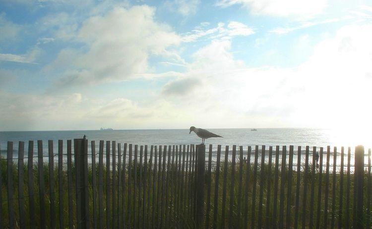 Days Rehoboth Beach, Delaware o - wayves | ello