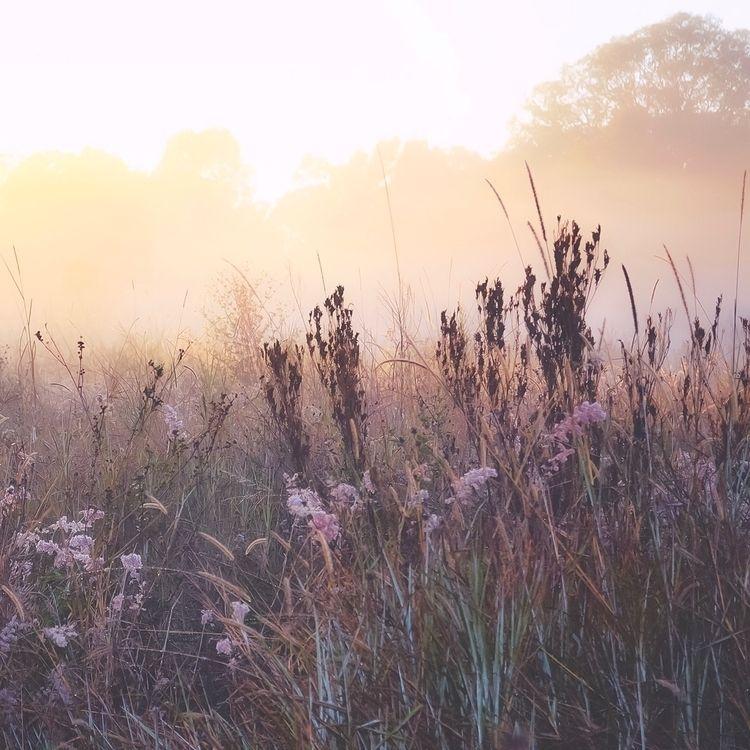 fog, pure, bliss, calm - laylanicholson | ello