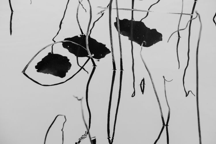lotus, leaf, flowers, inkpainting - lovin2018 | ello