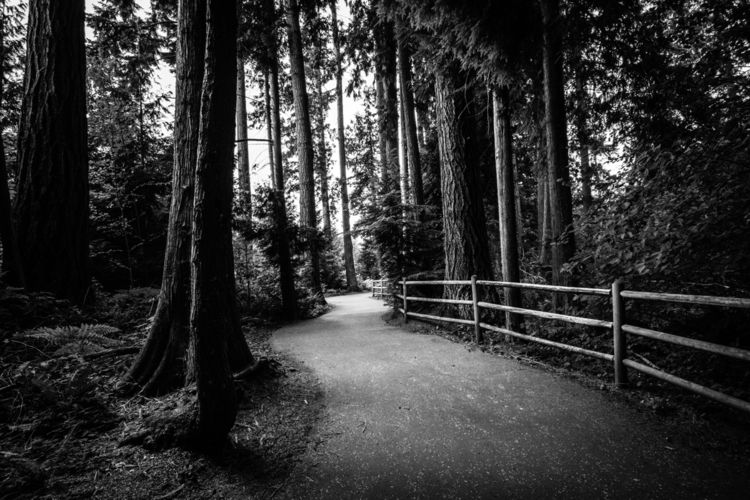path forest - pnw, trees, nature - jb3dahmen | ello