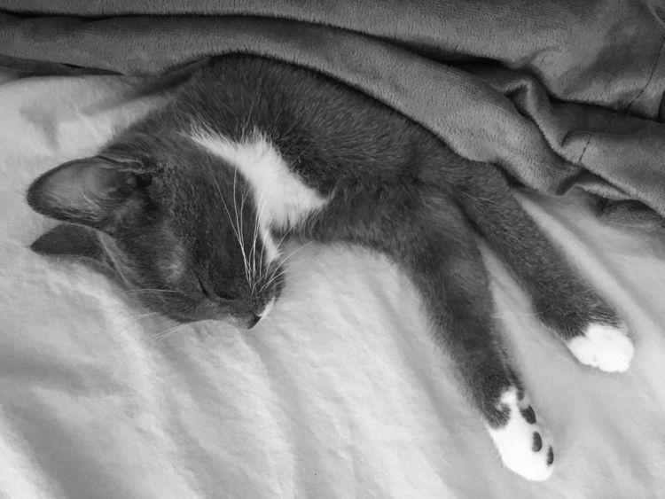 Snooze - wisp, cat, kitten, snooze - jb3dahmen | ello