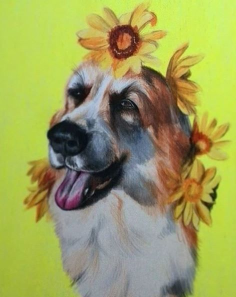 Hund auf Neongelb (color pencil - katharinawozny | ello