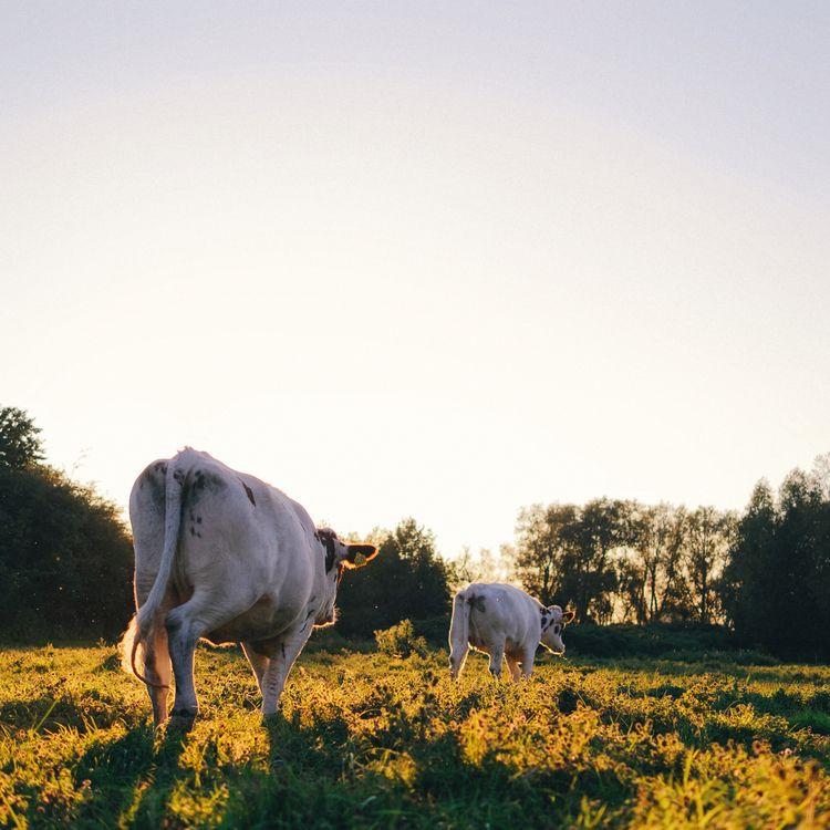 Native daughters golden west - animals - klaasphoto | ello