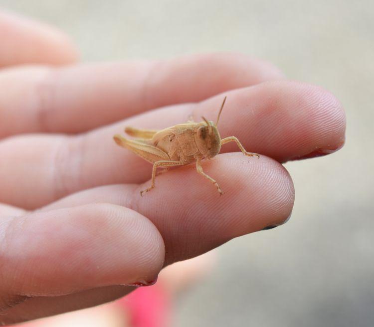 Grasshoppers Madeira - euric | ello