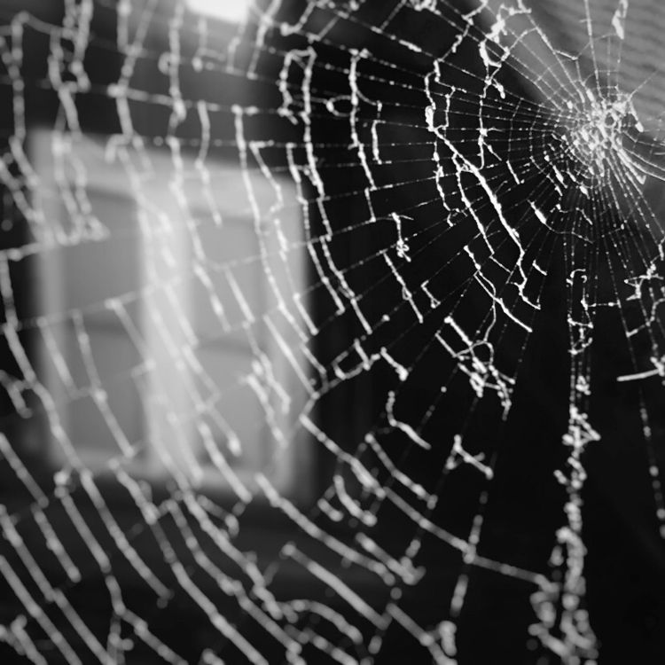 Spiderweb - blackandwhite, photography - aleksaleksa | ello