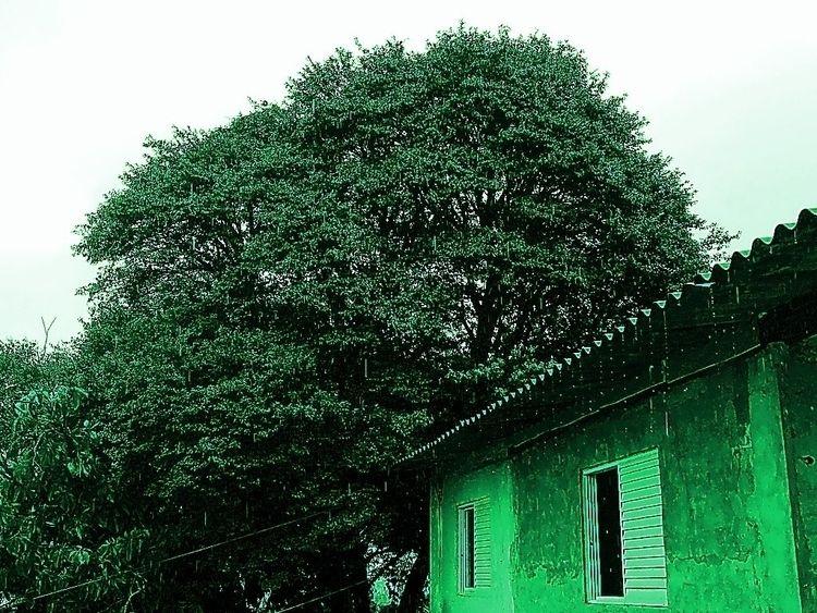 Raining chlorophyll (Vila Gomes - sergiorcs82 | ello