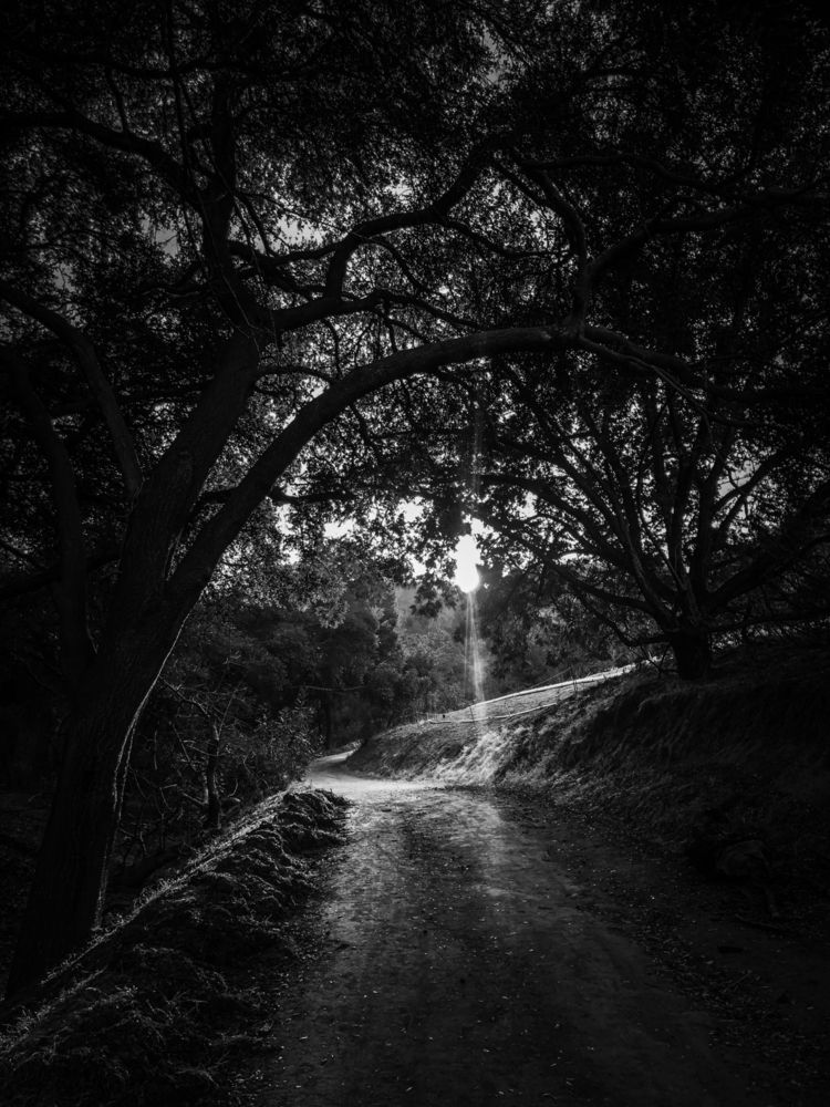 nature, hike, SoCal, blackandwhite - melissa-me | ello