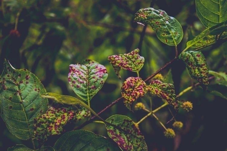 Nature.. Geko 🦎 ...  - nature, photography - gianluigi-g | ello