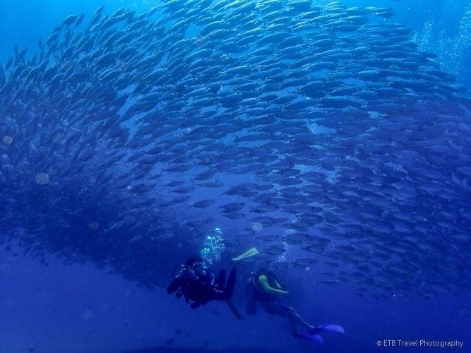 Swimming massive ball fish swir - etbtravelphotography | ello