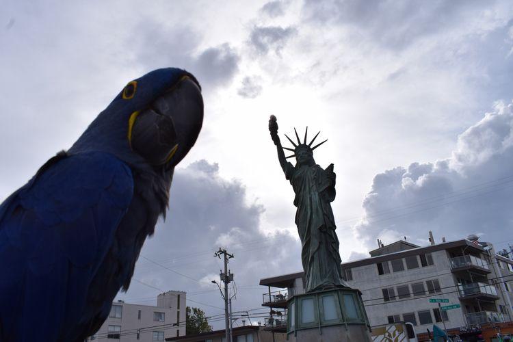 Hyacinth Macaw Princess Tara ad - michaelostrogorsky | ello