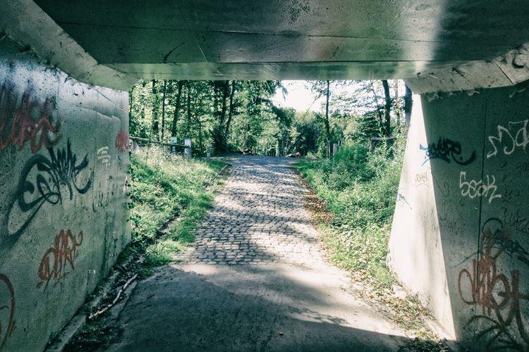 forest waiting tunnel - photography - studio_zamenhof | ello