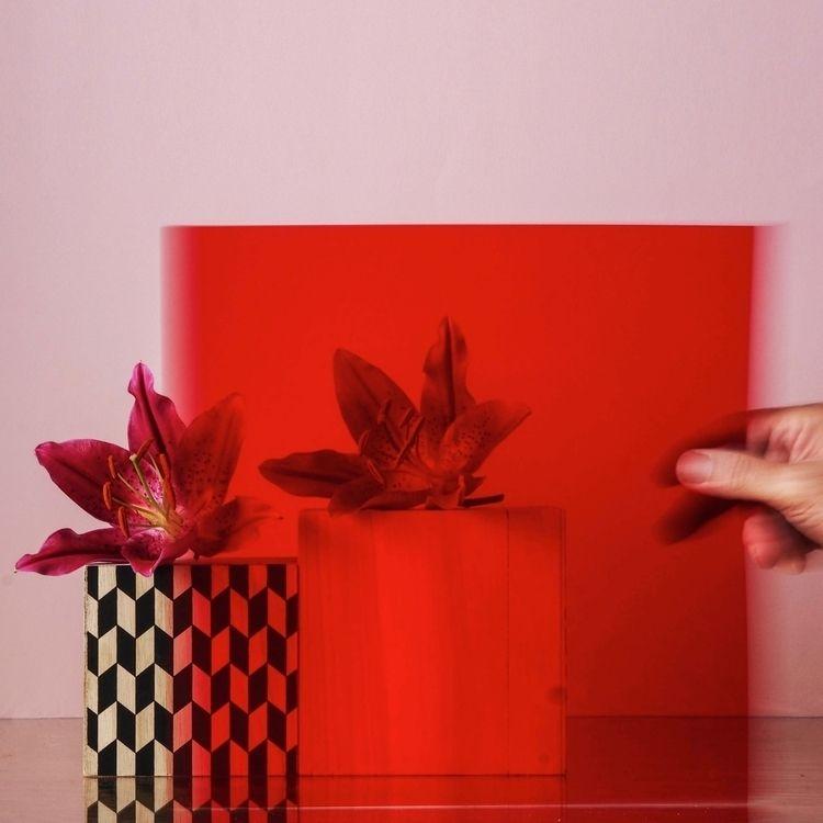 Movement Red  - red, movement, flower - mrw_mrw | ello
