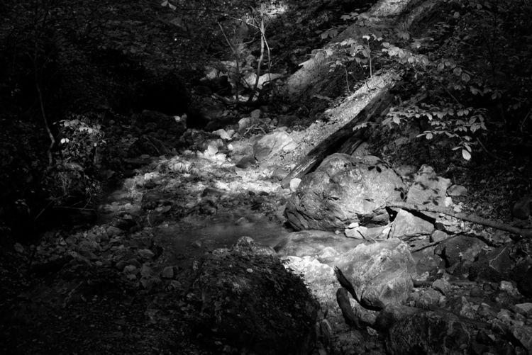 trap - photography, forest, ravine - marcushammerschmitt | ello