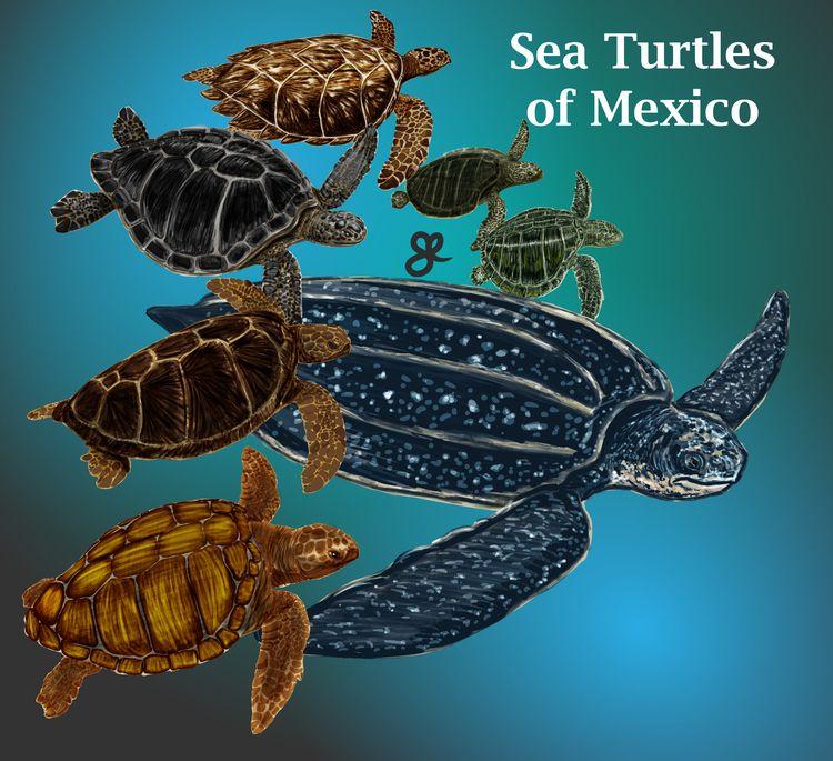 Sea Turtle Mexico Series, Natur - kumavilla | ello