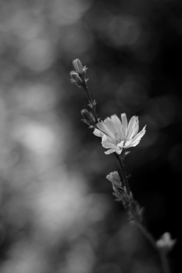 light dark white photography wp - michaeljohnsworld | ello