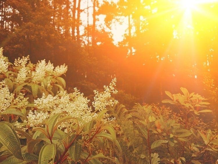 Hot - sun, sunset, ello, ellolandscape - felipehelfstein | ello