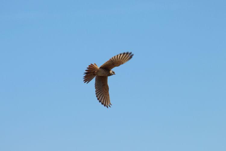 onebird, bird, flying, nature - phoenixk | ello