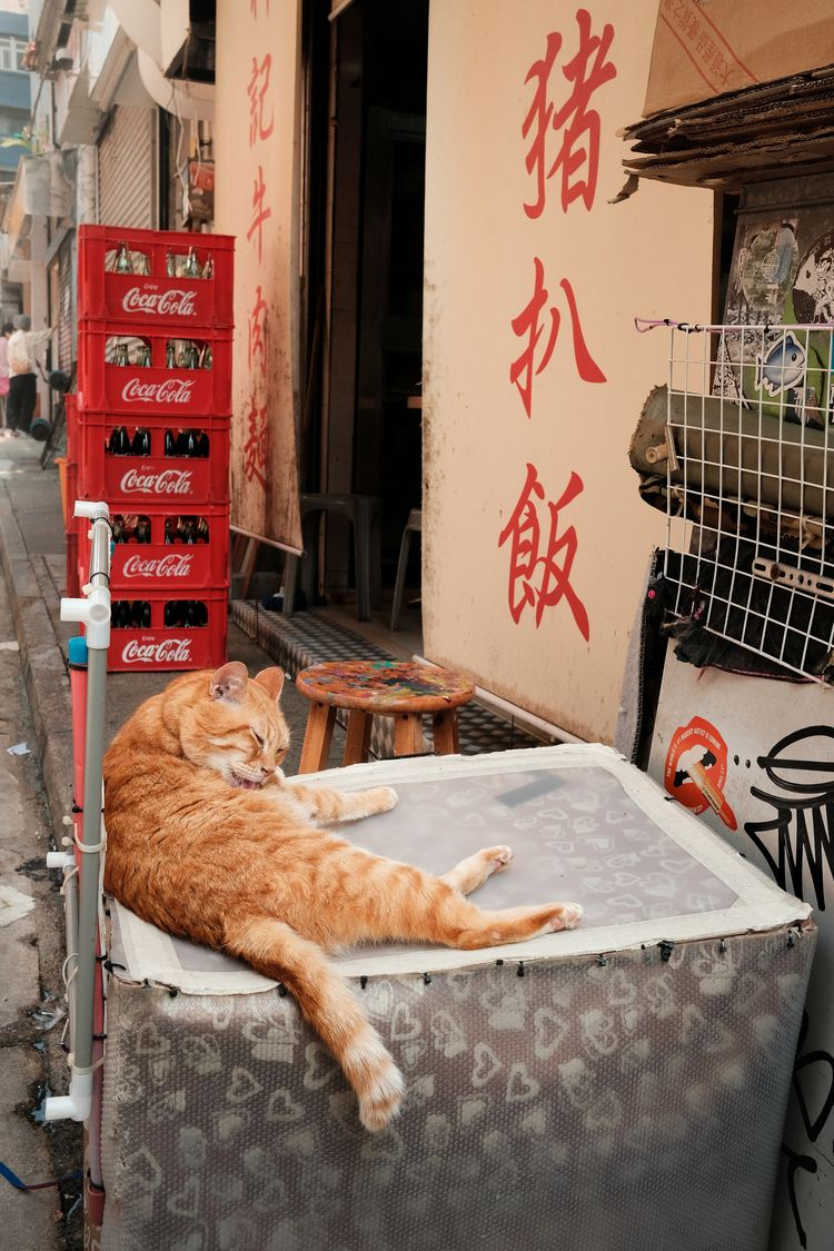 Pork chop rice shop kitty - xseries - kch | ello