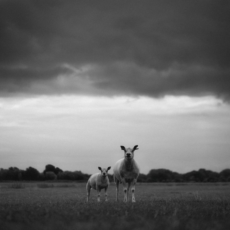 Disreputable sorts - animals, blackandwhite - klaasphoto | ello
