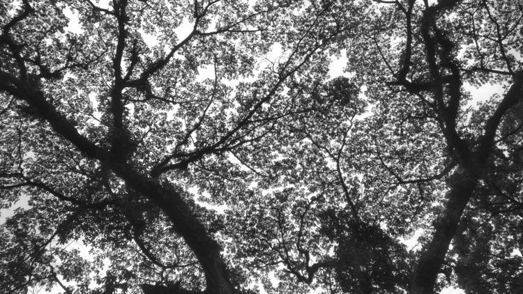 Magic tree - countyhell | ello