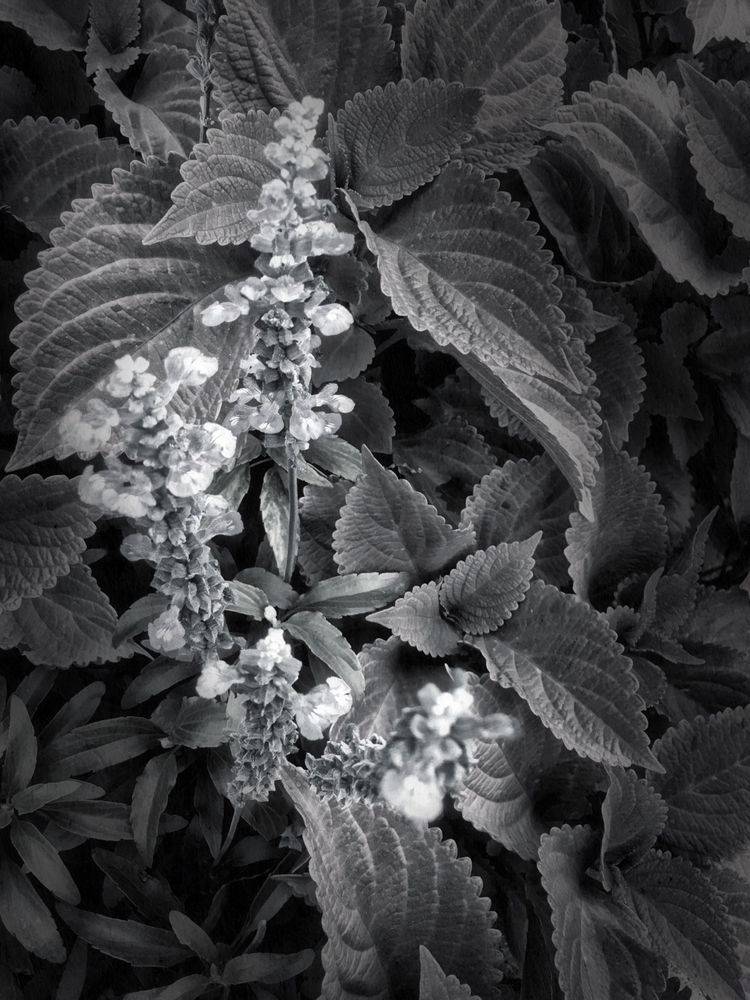 flowers, arapahoe_station, antiqued - matchgrun | ello