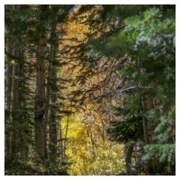 Gold green. photos visit - outdoors - etbtravelphotography | ello