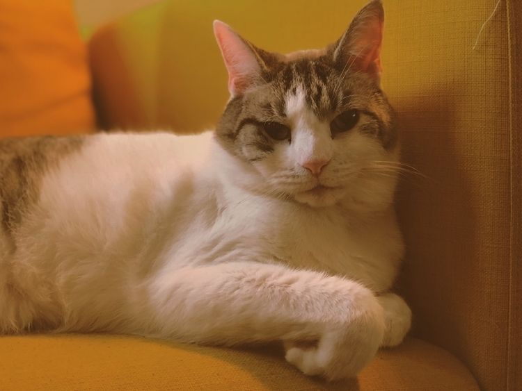 Moosh - cat, photography, paw, soft - samlittle | ello