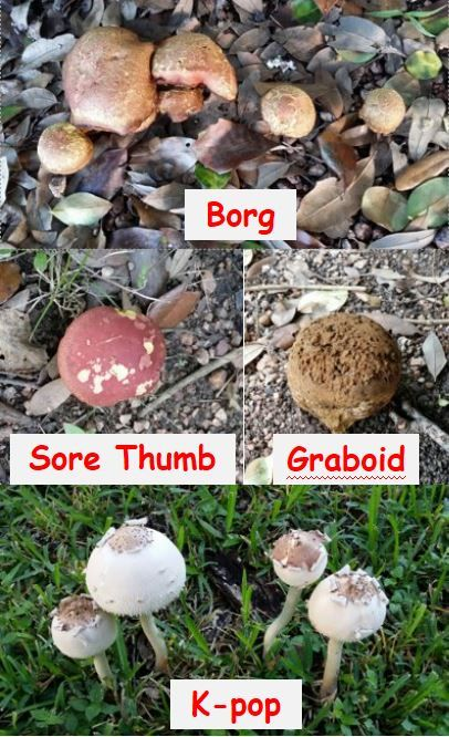 Naming Mushrooms mushroom seaso - rumblepress | ello