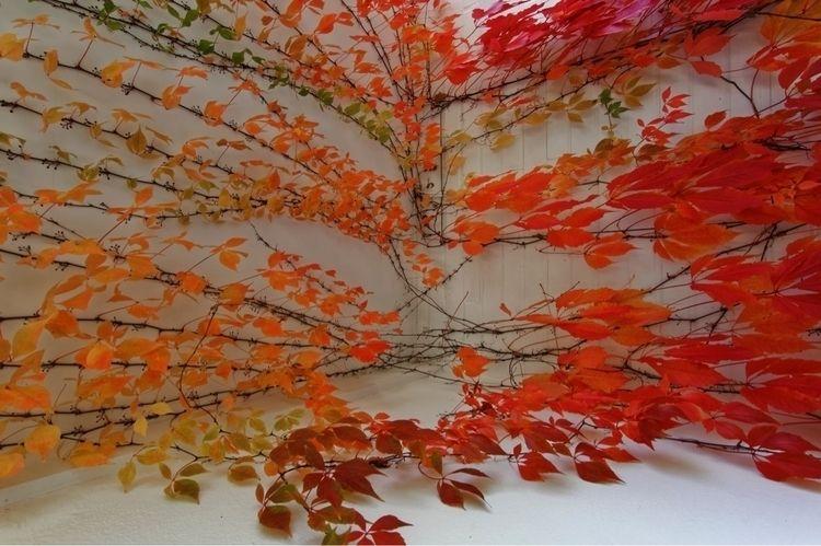 autumn colors - photography, nikon - zwischen-zeit | ello