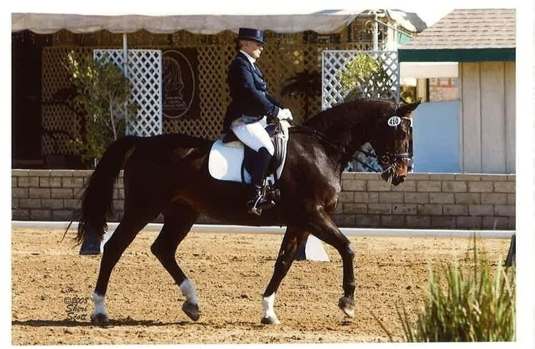 gaining years experience entert - shelleybrowningdressage | ello