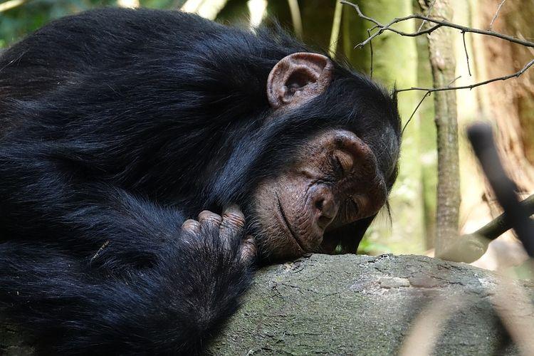 quando dormo sono bellissimo - demispink | ello