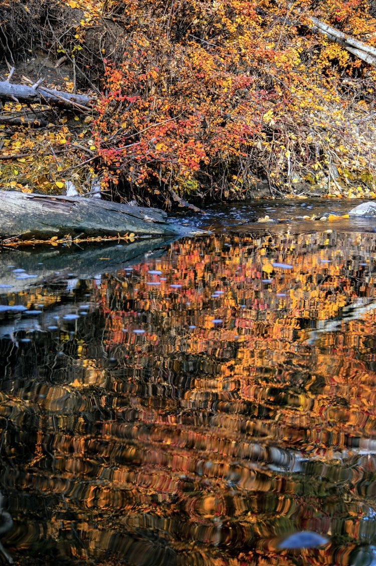 Prairie Monet... Autumn colours - jeff_day | ello