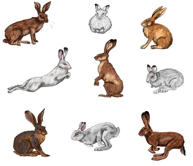 Hares bunnies - studiocorvid | ello