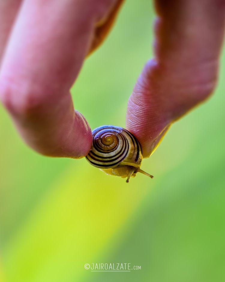 Tiny Snail :)  - canada, cityoftoronto - jairoalzate | ello