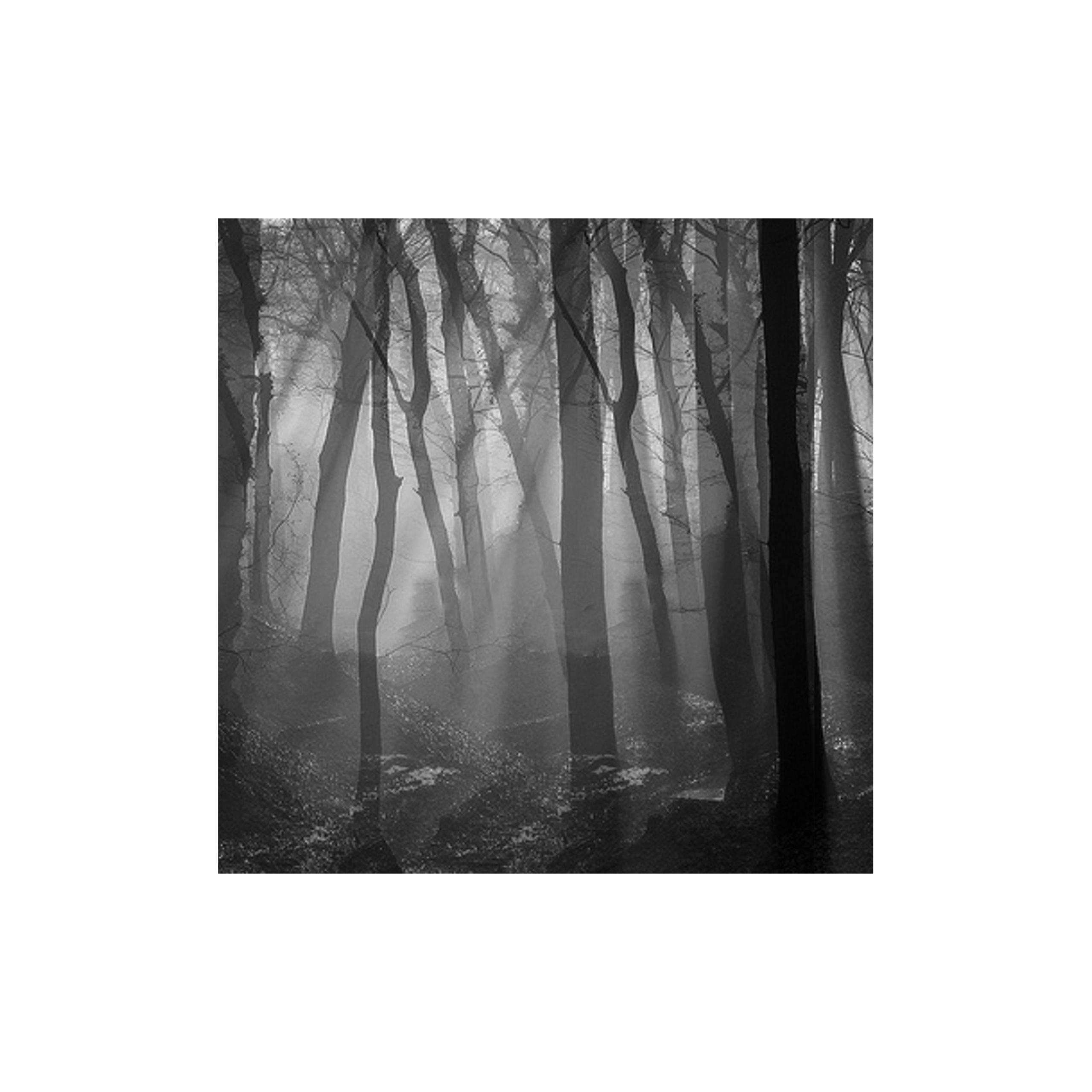 monique2211 Post 14 Oct 2018 16:46:00 UTC | ello