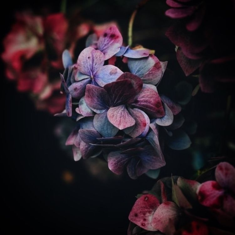 • Nature Inspires  - SilverRavenStudio - silverravenstudio | ello