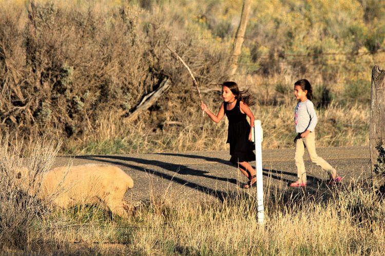 ~Girls bringing sheep - tessjohnstone   ello