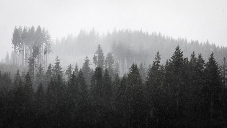 misty snowfall Olympic National - toddhphoto | ello