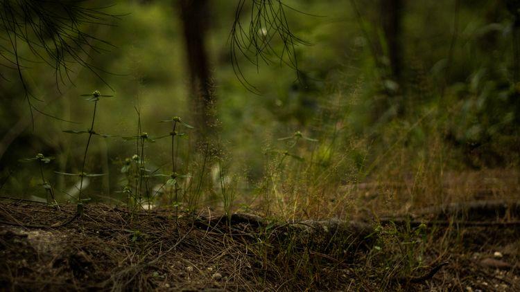 Natural (2018 - ghinason | ello