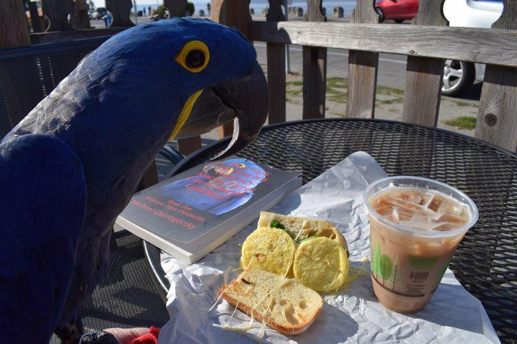 Parrot Coffee Edition. Hanging  - michaelostrogorsky   ello
