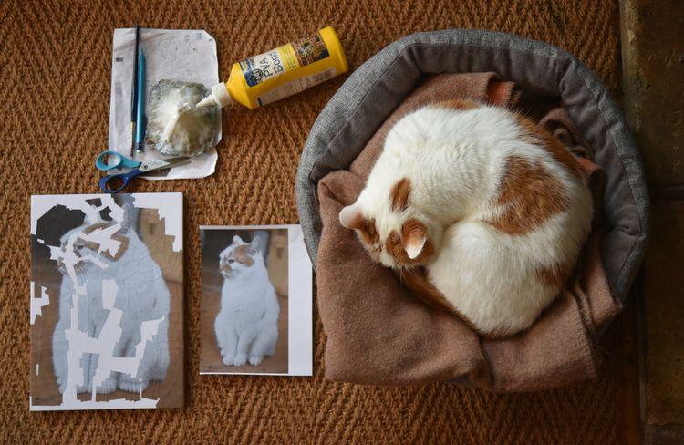 process - wip, cats, collage, pva - loladupre | ello